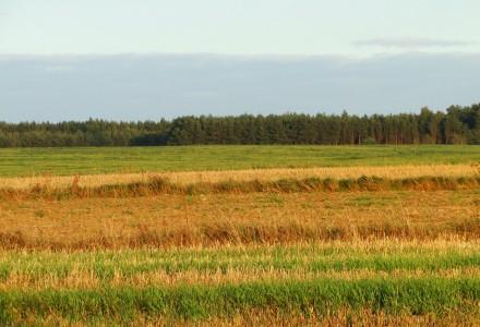 Zmowa cenowa przy skupie zbóż
