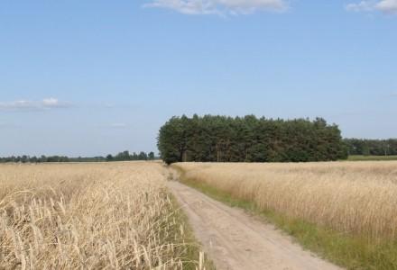 Stefczyk.info: wyższe dopłaty dla rolników