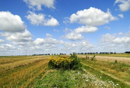 LIR: nowelizacja ustawy o podatku rolnym
