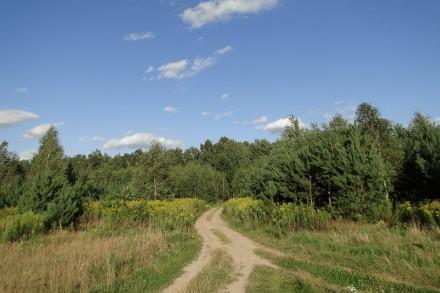 Sosnówka 2