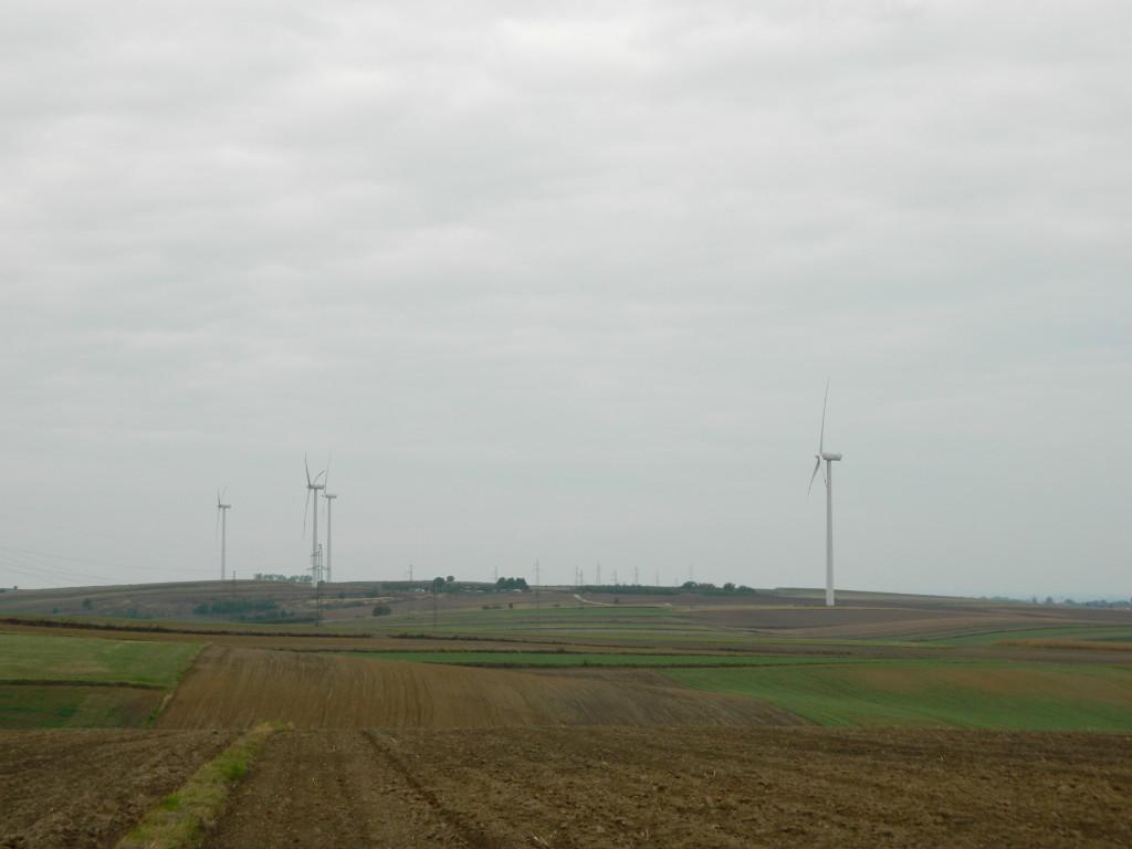 """Galeria zdjęć """"W sąsiedztwie wiatraków – Orzechowce 2013"""""""