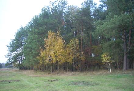 Referendum w sprawie lasów – głosu społecznego nie można zbagatelizować.