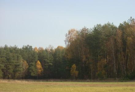 A u nas jesień – zdjęcia z abramowskich łąk