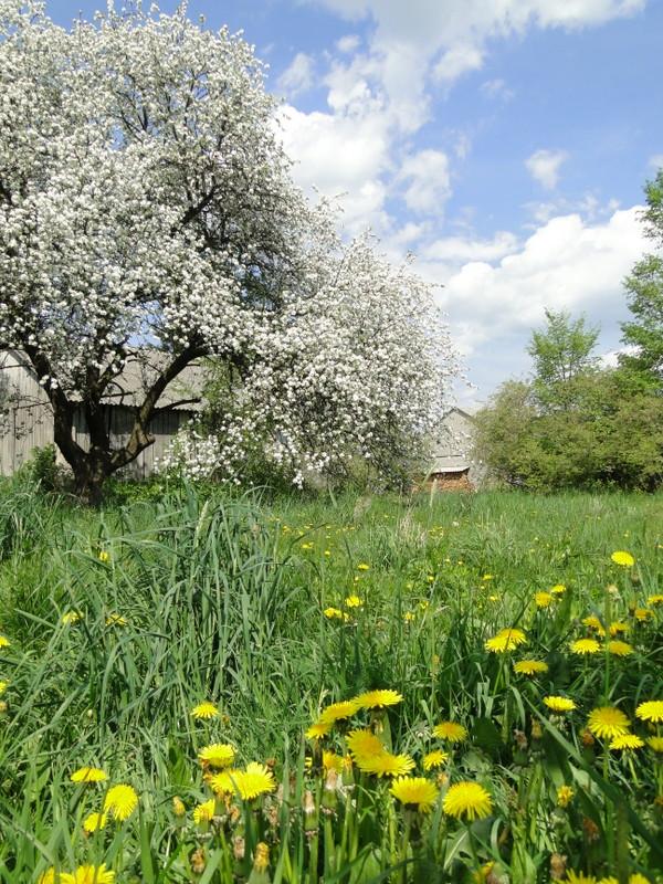 Sosnówka – wiosna w pełni