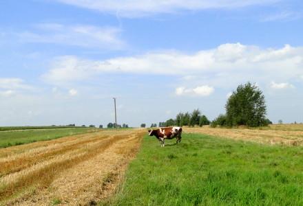 STOP wywłaszczaniu Polaków z ojcowskiej ziemi! Petycja do Premier Kopacz