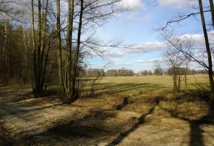 W lesie Abramowskim czuć wiosnę – zdjęcia Leszka Kozaka