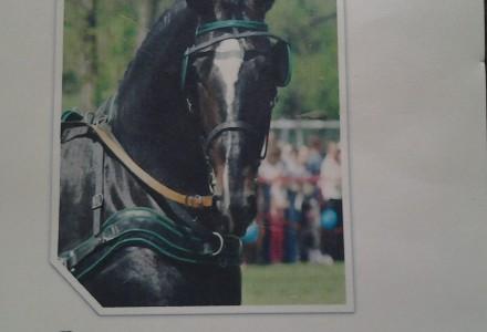 Zaproszenie dla miłośników koni – Bychawa – 10 maja 2015