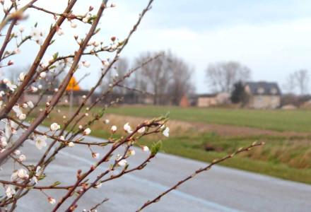 Już wiosna – zdjęcia Sylwii Zlot
