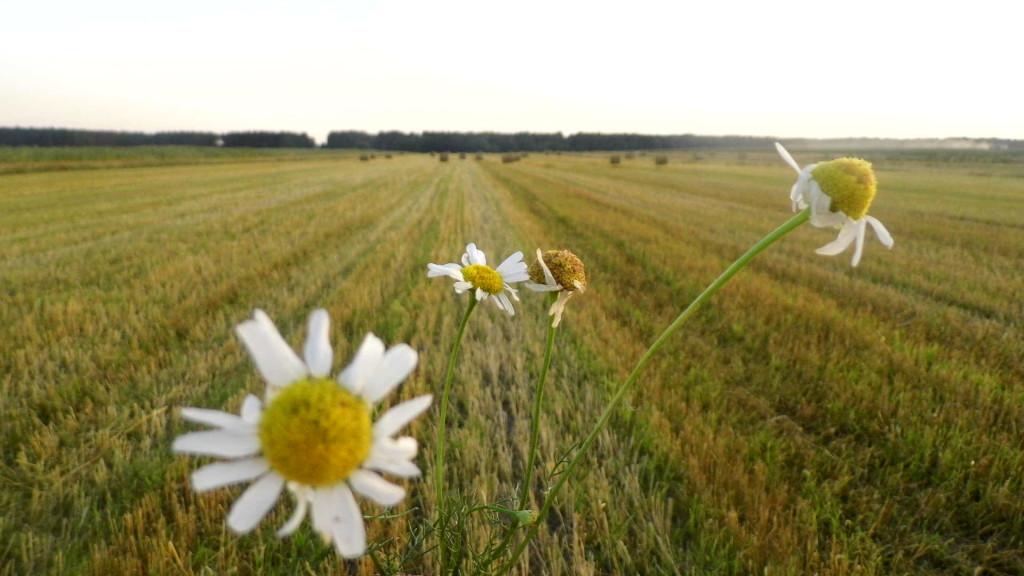Pejzaż letni – Glinnik. Zdjęcia Sylwii Zlot