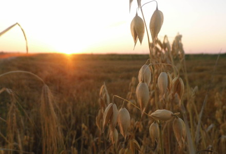Lubelska Izba Rolnicza przeciwna podpisaniu umowy CETA