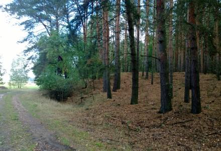 Koniec bezsensownego prawa. Wycinka drzew na prywatnej działce możliwa bez zezwolenia
