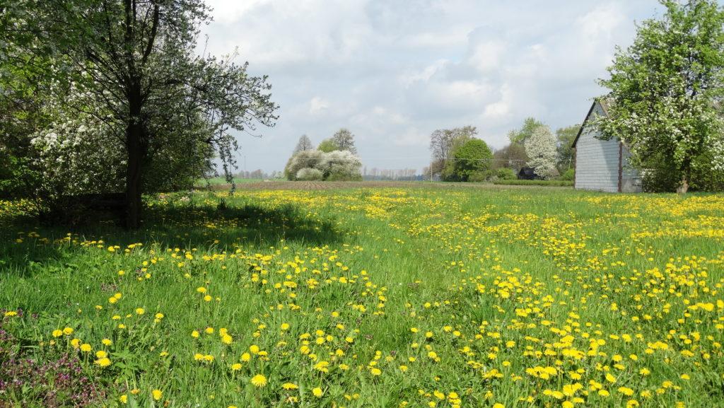 Wiosna w Sosnówce – zdjęcia Ryszard Kozak